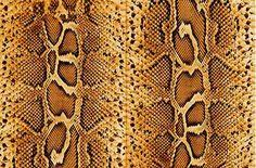 Snake Skin Pattern Awesome Snake Skin Patterns And Textures Animals Pinterest Snake