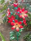 Цветы для сада из пластиковых бутылок своими руками мастер класс