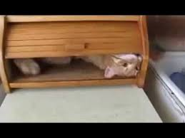 Cat In Bread Box Delectable Cat In A Breadbox YouTube