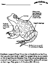 First Grade Math Activities as well Frog Activities together with  together with  moreover Free Worksheets For 2nd Grade Science   worksheet ex le likewise 1st grade science worksheets For Kids PDF additionally First Grade Worksheets for Spring   Planning Playtime besides  likewise Life Cycle of a Frog Worksheets   Cut and Paste further Free two writing worksheet printables in the Free Preview Download as well Life Cycle of a Frog   Worksheet   Education. on worksheets first grade frogs