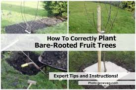 How To Grow Fruit Trees In A Small Space  YouTubeWhen Do You Plant Fruit Trees