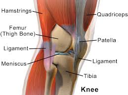 torn meniscus surgery pain doctor