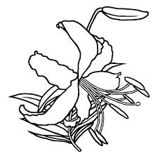 カノコユリ鹿子百合白黒夏の花無料イラスト素材
