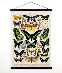 Pull Down Chart Vintage Butterfly Handmade Reproduction