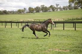 Image result for horse running in a field