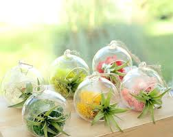glass plant terrariums small hanging glass vase air plant terrarium glass plant terrarium south africa