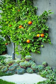 Small Picture 612 best Cactus Succulent Gardens images on Pinterest