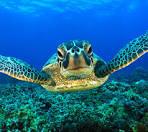 marine animal