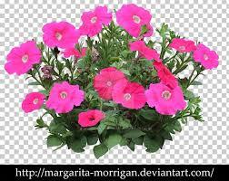 petunia vervain annual plant flower