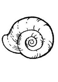 Small Picture An Extinct Ammonoidea Seashell Coloring Page Download Print