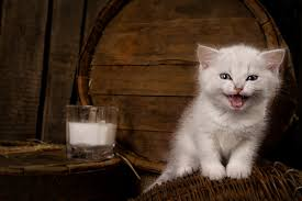 can kittens drink cow s milk