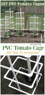 single pvc tomato cage with watering pipe diy instructions low budget diy pvc garden projects