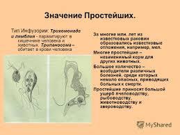 ЛЕЙШМАНИИ это Что такое ЛЕЙШМАНИИ внутриклеточными  Трипаносома строение и жизненный цикл