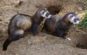 Imagini pentru animalute salbatice padure