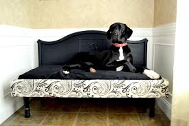 Choosing the Perfect Dog Beds for Great Danes