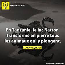 Le Saviez-vous ? Les mystères du lac Natron Images?q=tbn:ANd9GcQ9ckGndzbDpN92jLGxjUI__6reCzIuoSTqnsPdA2IQyismtahy