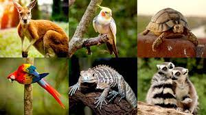 32,000 Indians Say They Possess Exotic Animals In Post-COVID Amnesty