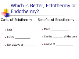 Endothermy Vs Ectothermy Venn Diagram What Is A Frog An Introduction To Amphibians And