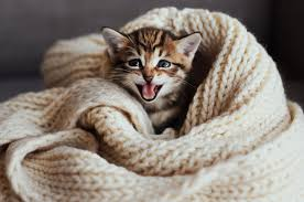 25 Best Cat Quotes That Perfectly Describe Your Kitten Funny And