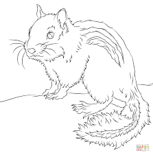 Chipmunk coloring page | Free Printable Coloring Pages