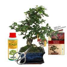 gift set bonsai carmona ientee about 6 years old beginner set