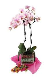 orchids the perfect gift for any occasion