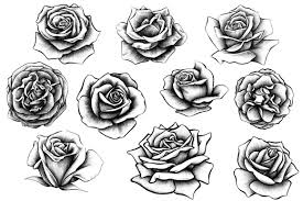 Small Picture 10 Rose Illustrations Rose illustration Rose and Illustrators