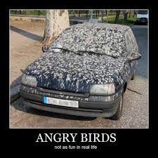 Car Quote Awesome Funny Quote Angry Birds Car = Bird Poop Madness