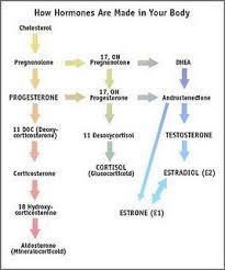 Hormone Cascade Hormone Imbalance Estrogen Dominance