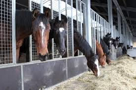 symptomen selenium tekort paard