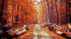 Autumn Forest Wallpapers - Top Free ...