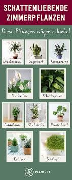 Schattenliebende Zimmerpflanzen Diese Pflanzen Mögens