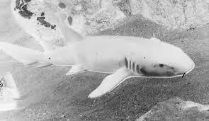 Naar De Haaien Speurblad Van Groep 7 8 Opdracht