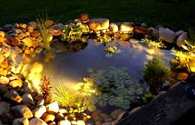 paradise garden lighting spectacular effects. A Water Garden With Submerged Lighting Is Spectacular. The Lovely, Luminous Light Shows Off Plants And Fish After Dark. Paradise Spectacular Effects