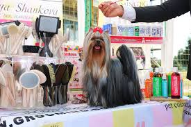 best yorkie shampoo and conditioner recommended by the groomers