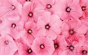 Desktop Wallpaper Pink Flowers