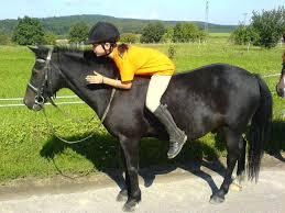 Ponyhof Nos Sprüche