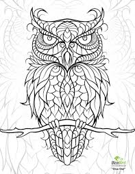 Free Printable Owl Coloring Pages For Adults Papers And Essays