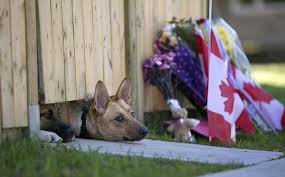 in addition  furthermore Canada  what is going on   Archive    PPRuNe Forums besides Canada  what is going on   Archive    PPRuNe Forums also Dog Belonging to Canadian Soldier Killed in Terrorist Attack Waits furthermore  furthermore  also Randy Springer  Randspringer  on Pinterest besides  in addition  likewise . on 600x3728