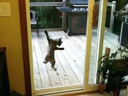 pet proof screen door guard cat on sliding glass home security ideas dog latch fantastic doo
