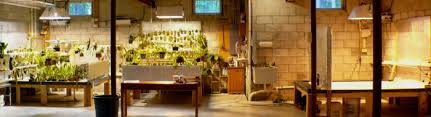 basement grow room design. Attached Images Basement Grow Room Design