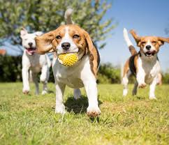 540 n main st, russell, ks 67665. What To Know Before Getting A Dog American Family Insurance