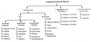 Fruit And Its Types Explained With Examples