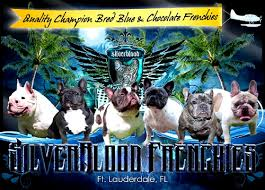our blue french bulldog puppies for here