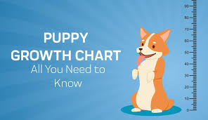 Bernedoodle Growth Chart Puppy Growth Chart By Month Breed Size With Faq All You
