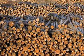 essays on deforestation essay on deforestation synopsis coursework service essays deforestation cause effect