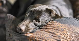 Loss Of A Pet Quotes Extraordinary Pet Loss Quotes To Help You Cope When Times Are Tough