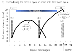The Control Of Follicular Dynamics By Pgf2 Gnrh Hcg And