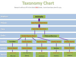 Bird Taxonomy Chart 06 01 Classification Project Ppt Video Online Download