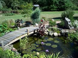 firstly you will need to figure how where do you want the pond outdoor or indoor how much do you want to spend the design once you have figure that all